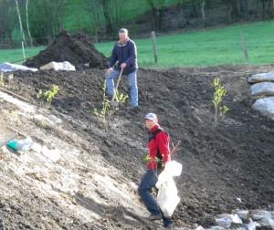 Die ersten Büsche werden von Herbert und Fredi eingesetzt